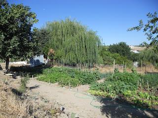 ateliê de jardinagem 030